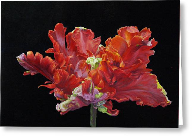 Red Parrot Tulip - Oils Greeting Card by Roena King