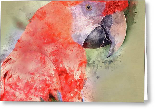 Red Parrot Digital Watercolor On Photograph Greeting Card by Brandon Bourdages