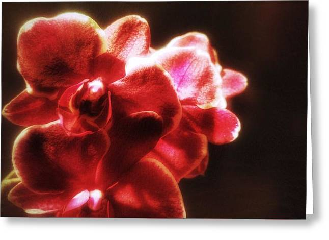 Greeting Card featuring the photograph Red Phalaenopsis by Isabella F Abbie Shores FRSA