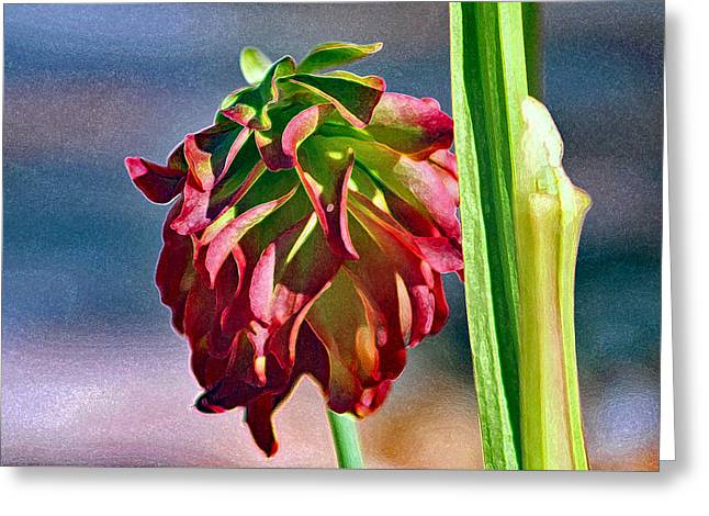 Red Pitcher Plant Greeting Card