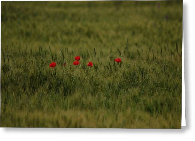 Red Poppies In Meadow Greeting Card