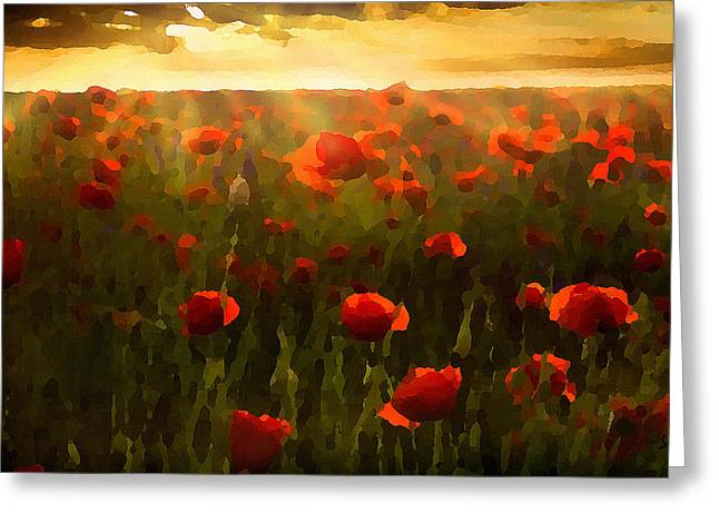 Red Poppies In The Sun Greeting Card