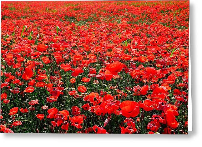 Red Poppies Greeting Card by Juergen Weiss