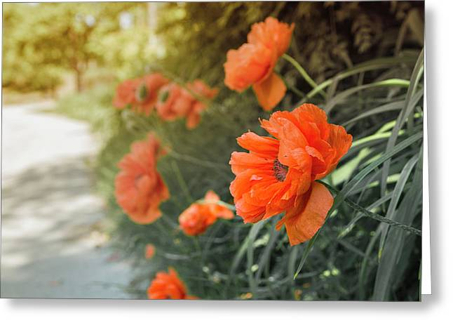 Red Poppies Greeting Card by Thubakabra