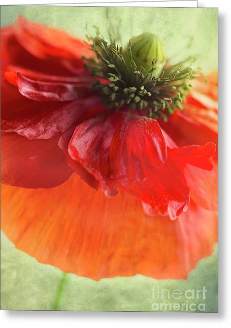 Red Poppy Greeting Card by Elena Nosyreva