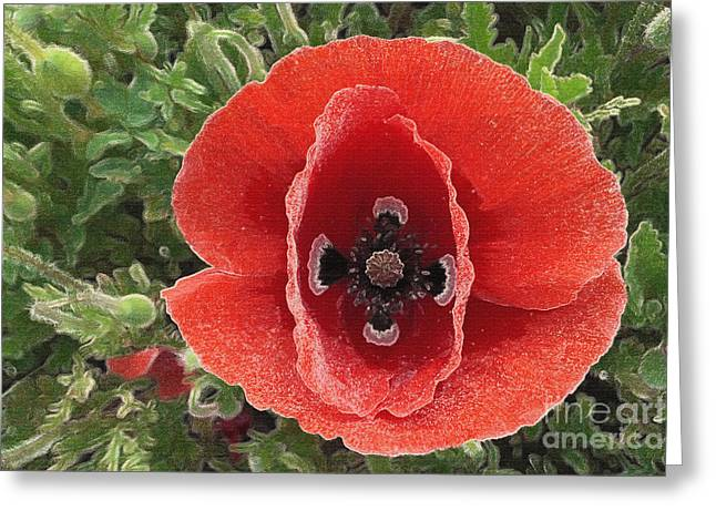 Greeting Card featuring the photograph Red Poppy Flower 2 by Jean Bernard Roussilhe