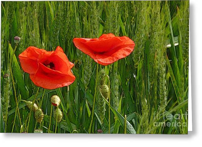 Red Poppy Flowers In Grassland 2 Greeting Card
