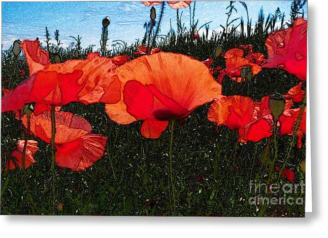 Greeting Card featuring the photograph Red Poppy Flowers In Grassland by Jean Bernard Roussilhe