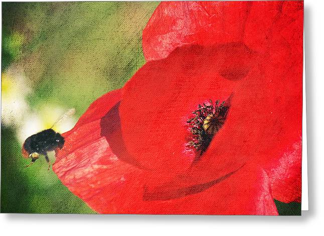 Angela Doelling Ad Design Photo And Photoart Greeting Cards - Red poppy impression Greeting Card by Angela Doelling AD DESIGN Photo and PhotoArt