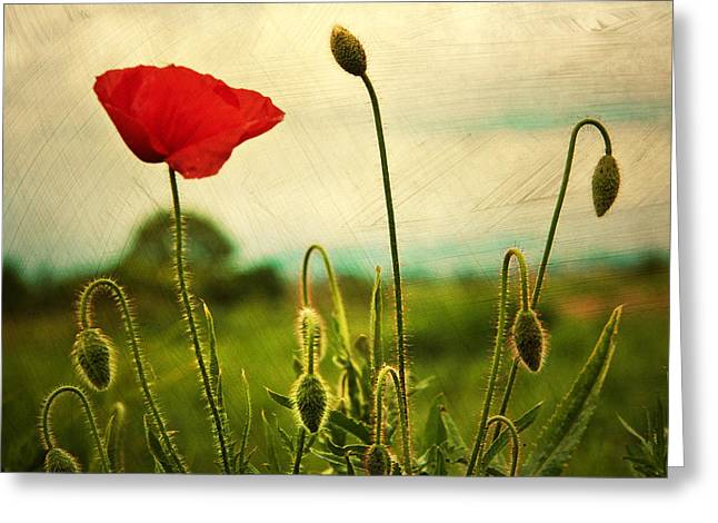 Red Art Greeting Cards - Red Poppy Greeting Card by Violet Gray