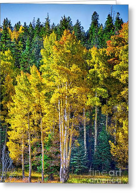 Red River Aspens Greeting Card