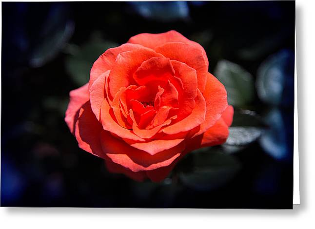 Red Rose Art Greeting Card by Milena Ilieva