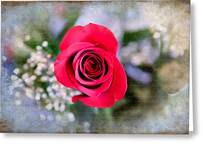 Red Rose Elegance Greeting Card by Milena Ilieva