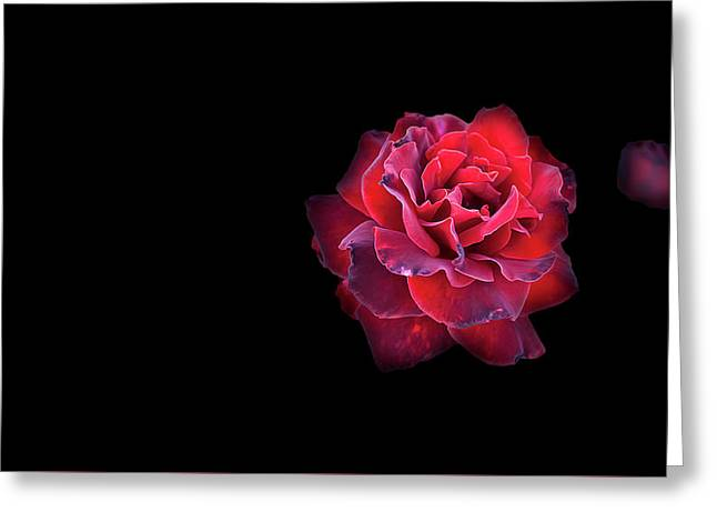 Red Rose Greeting Card by Nat Air Craft