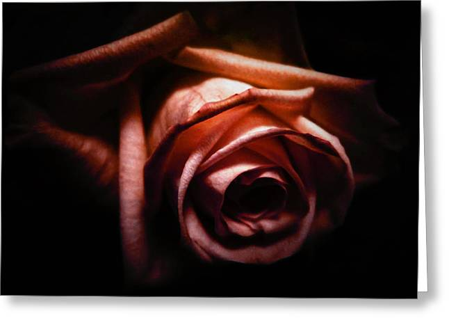 Red Rose Greeting Card by Nicklas Gustafsson