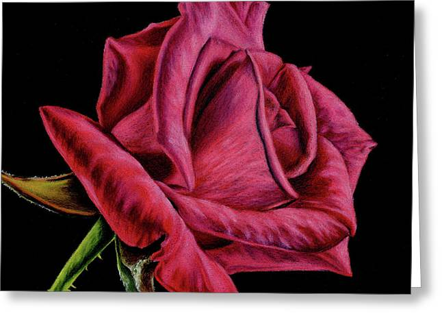 Red Rose On Black- Square Format Greeting Card