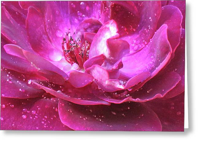 Red Rose Rain Dance - 2nd In A Series Of 6 Greeting Card