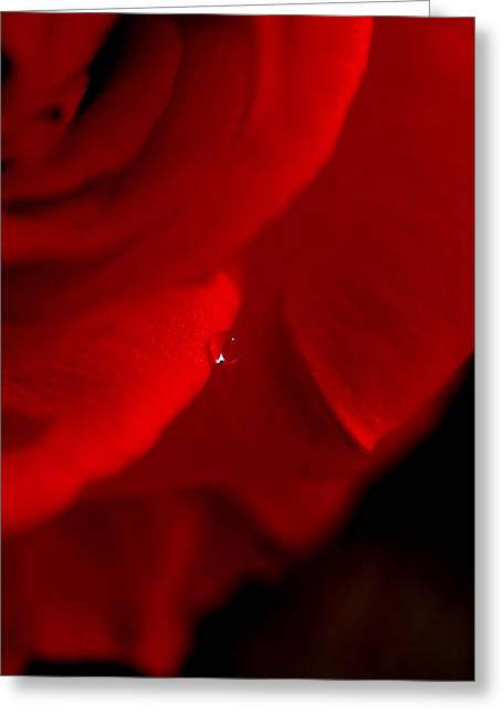 Red Rose Rain Drop Greeting Card by Michelle  BarlondSmith