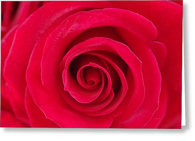 Red Rose Swirls Greeting Card by Romina D