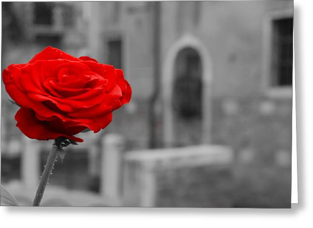 Red Rose With Black And White Background Greeting Card by Michael Henderson