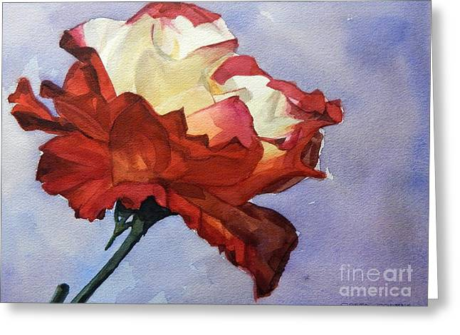 Watercolor Of A Red And White Rose On Blue Field Greeting Card