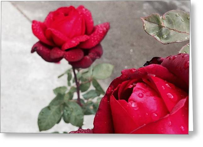 Red Roses Greeting Card by Beverly Johnson