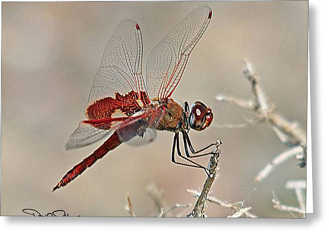 Red Saddlebags Dragonfly Greeting Card by David Salter