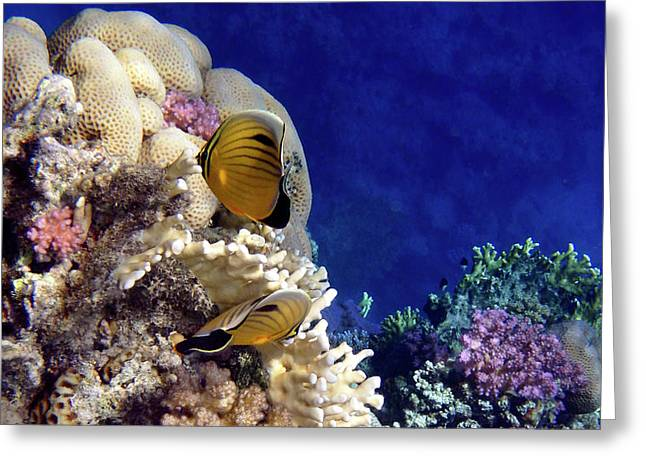 Red Sea Exotic World Greeting Card
