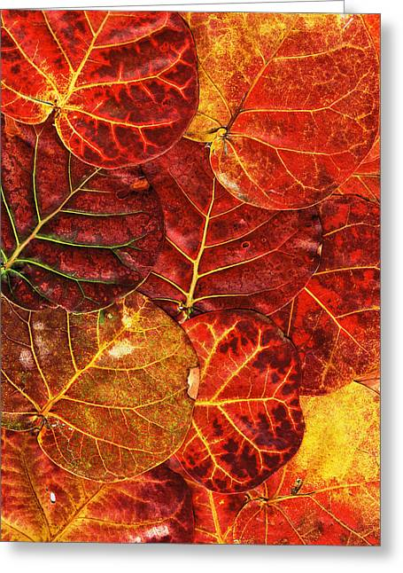 Red Sea Grapes By Sharon Cummings Greeting Card by Sharon Cummings