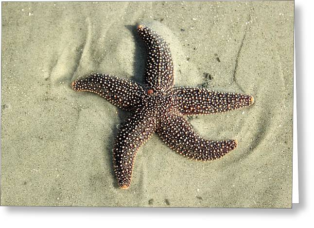 Red Sea Star Greeting Card