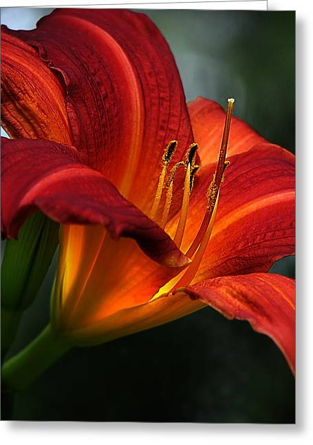 Asiatic Greeting Cards - Red Seduction 2 Greeting Card by John  Poon