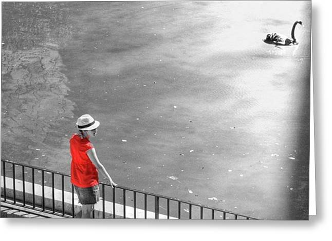 Red Shirt, Black Swanla Seu, Palma De Greeting Card