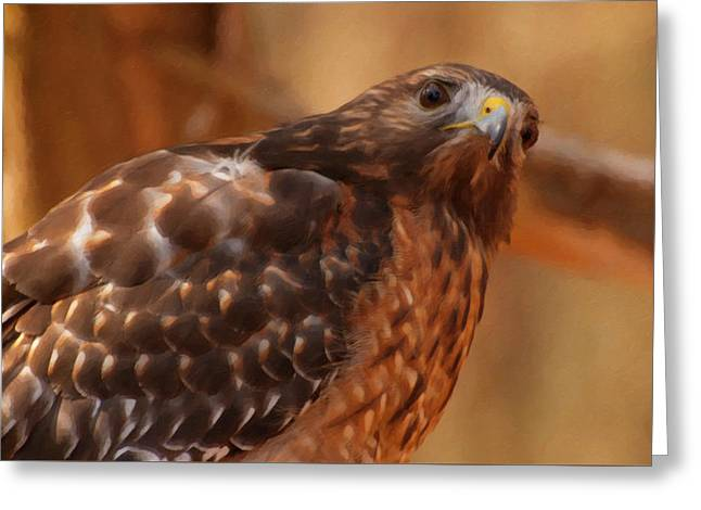 Red Shouldered Hawk 1  Greeting Card by Chris Flees