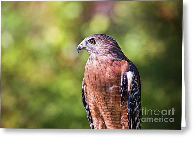 Red Shouldered Hawk Up Close Greeting Card