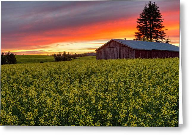Red Sky Over Canola Greeting Card by Mark Kiver