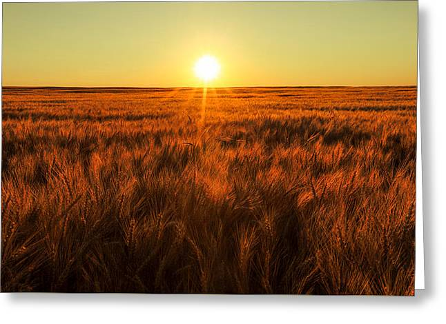 Red Sky Wheat Greeting Card