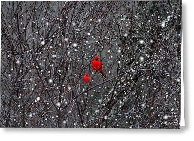 Red Snow Greeting Card by Bill Stephens