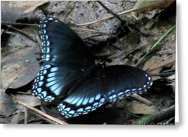 Greeting Card featuring the photograph Red Spotted Purple Swallowtail Butterfly by Donna Brown