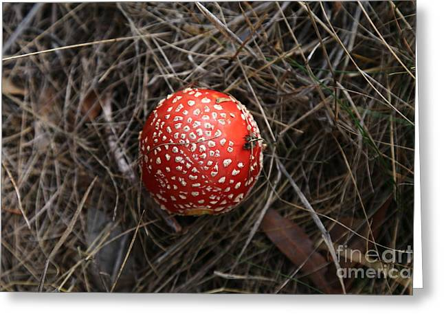 Red Spotty Toadstool Greeting Card