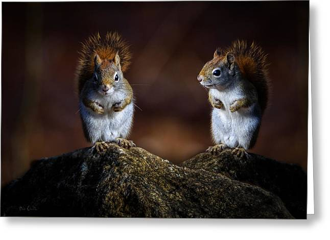 Red Squirrel Greeting Card by Bob Orsillo