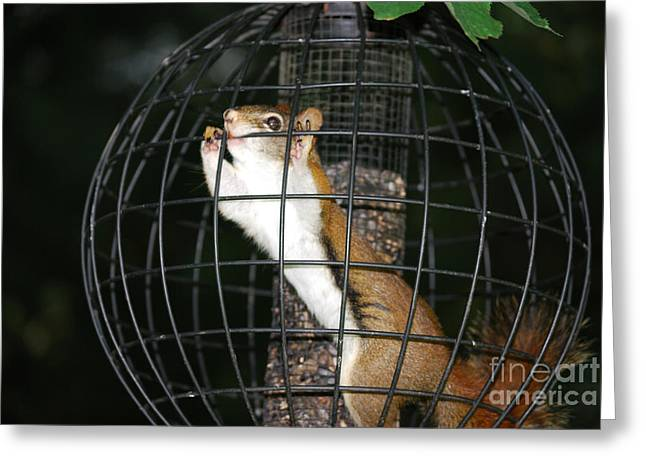 Red Squirrel Jail Greeting Card