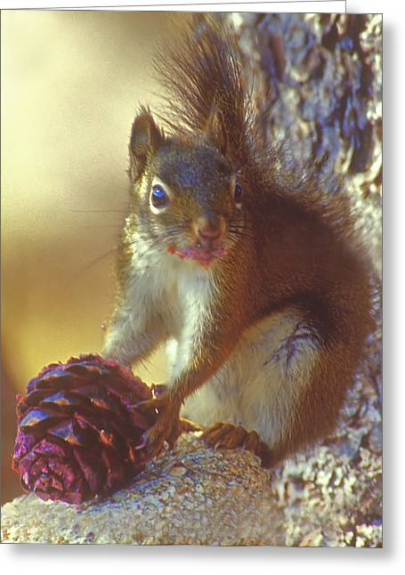 Red Squirrel With Pine Cone Greeting Card