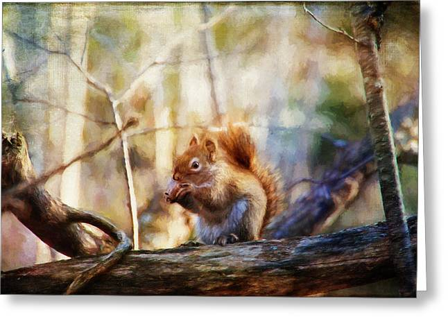 Red Squirrel With Pinecone Greeting Card