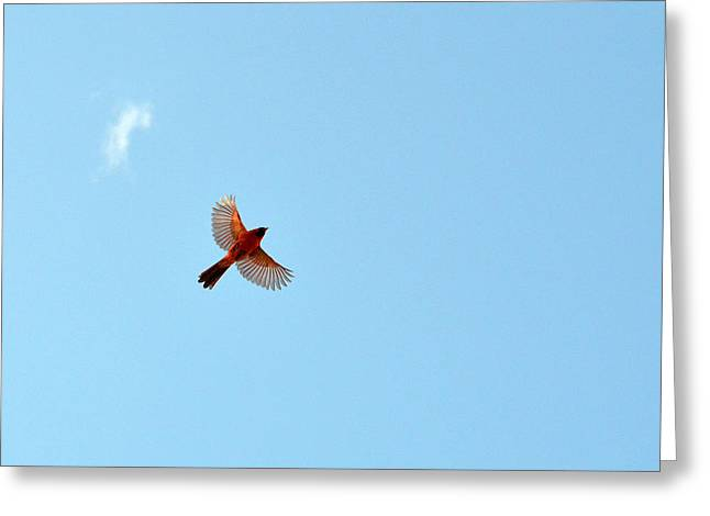 Red Star In Blue Sky Greeting Card