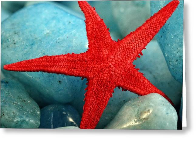 Red Starfish Greeting Card