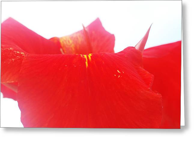 Red Greeting Card by Susette Lacsina