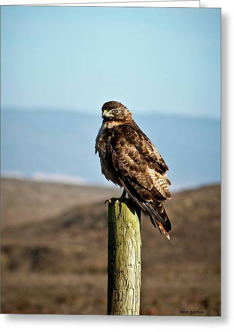 Red Tail Hawk I Color Greeting Card