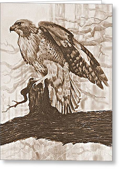 Red Tail Hawk Greeting Card by William Michel