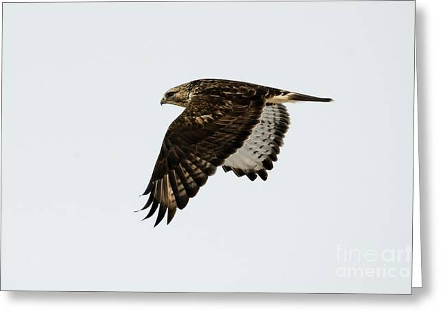 Red-tail Wings Down Greeting Card by Mike Dawson