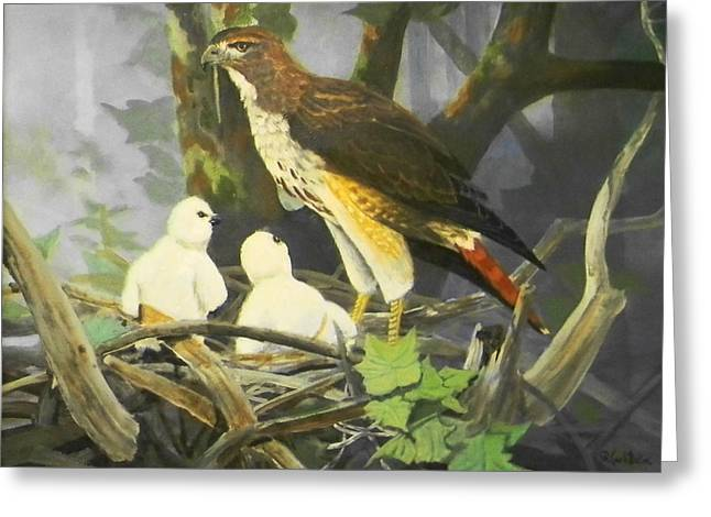 Red-tailed Hawk And Chicks Available Greeting Card